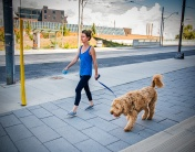 wbwoman-walking-her-dog