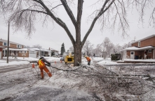 cleanup after ice storm