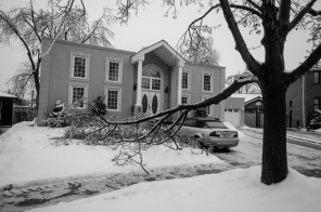 Fallen Branches on Lawn