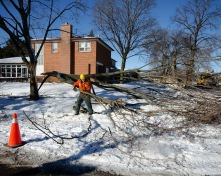 ice storm_cleanup