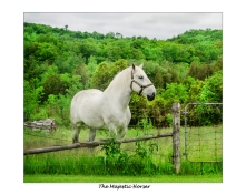 wbmajestic-horse2