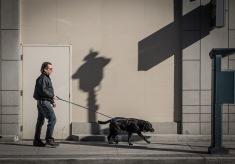 wbdog-and-master2