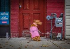 wbdog-on-a-leash