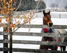 wbhorse-in-winter